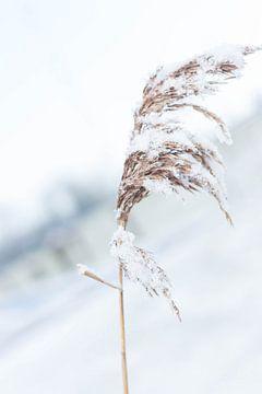 Een winterlandschap in de sneeuw van Chantal Cornet