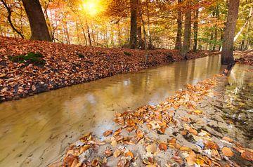 Autumn in Leuvenum Forest sur Rob Kints