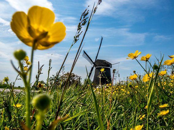 Molen nabij Jisp Noord Holland