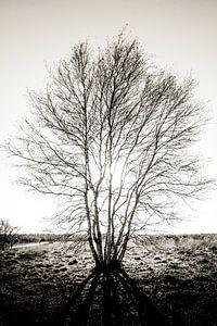 im Schatten des Baumes von Davy Hansen