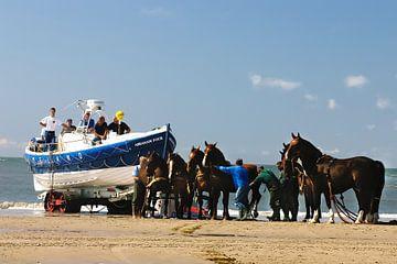 KNRM Ameland trekpaarden van