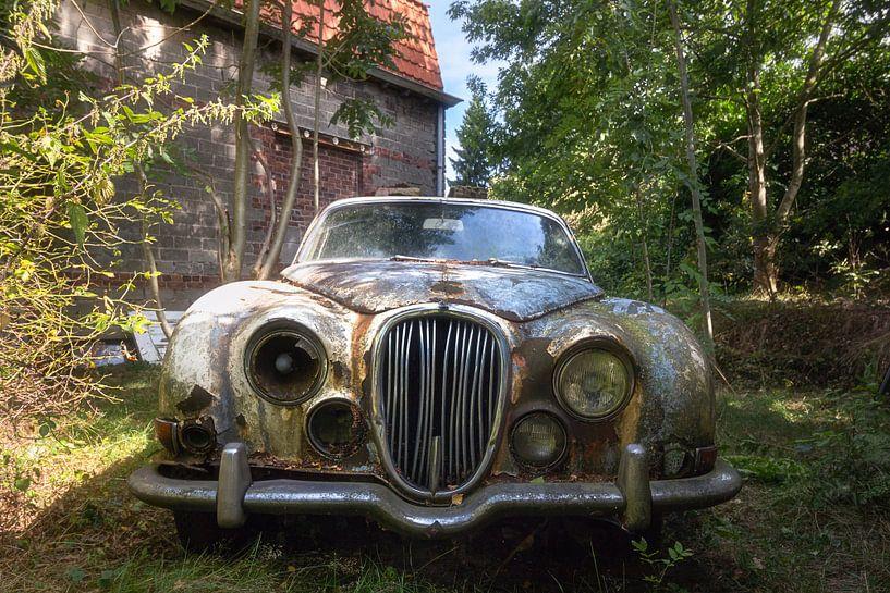 Verloren Jaguar. van Roman Robroek