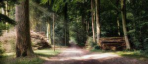 Wandeling door het bos van Marita Autering