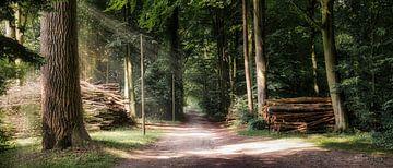 Promenade en forêt sur Marita Autering