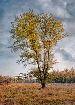 Eenzame boom in de herfst kleuren en blauwe hemel met wolken, Nederland