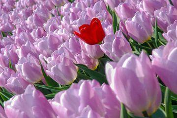 Roze tulpen von Nel Wierenga