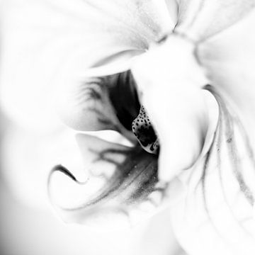 Schmetterlingsorchidee in Schwarz-Weiß von Leontien van der Willik-de Jonge