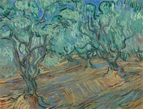 Vincent van Gogh, Olivenhain von 1000 Schilderijen