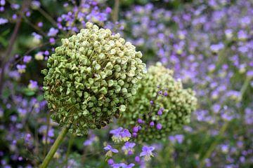 Wilde bloemen van Nicolette Vermeulen