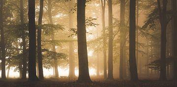 Forest Fall von Dennis Wierenga