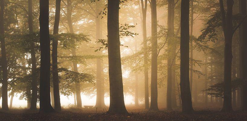 Mistig Herfst Bos  van Dennis Wierenga