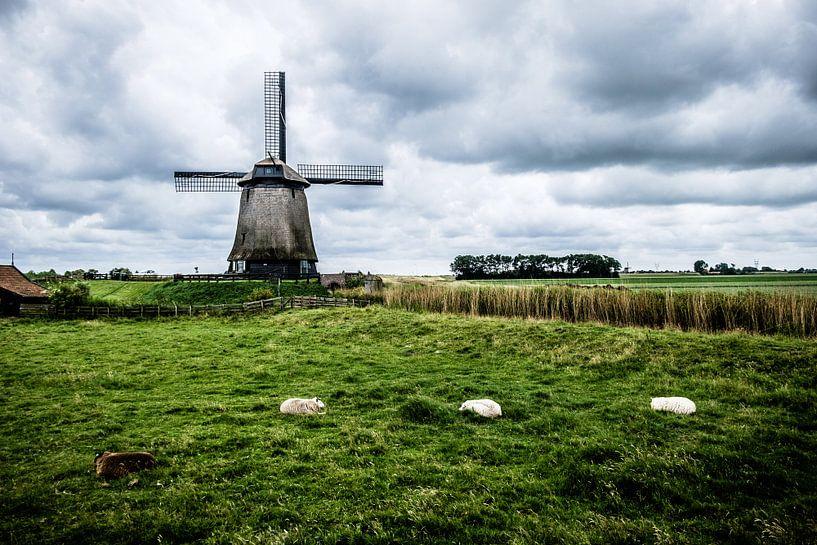Dutch Mills - Sheeps lying on the meadow van Emel Malms