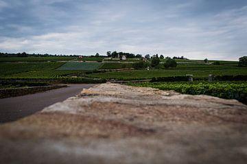 Le mur à la vigne sur Onno van Kuik