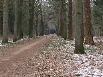 Doorkijk in een bos in de winter - look through in a forest - Schauen Sie durch in einem Wald van