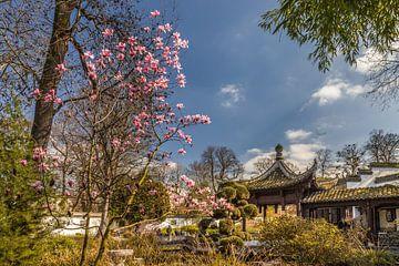 Lente in de Chinese Tuin in Frankfurt van Christian Müringer