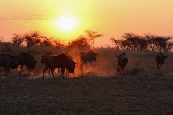Zonsondergang met wegrennende gnoe's van Annette van den Berg