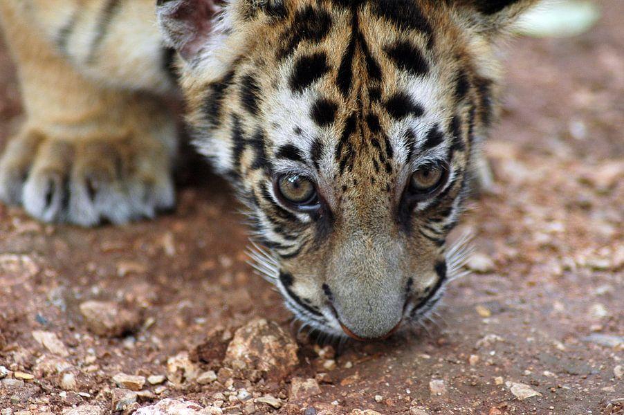 Tiger cub van Mariska Hofman