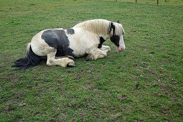Paard in een weide in Ierland van Babetts Bildergalerie
