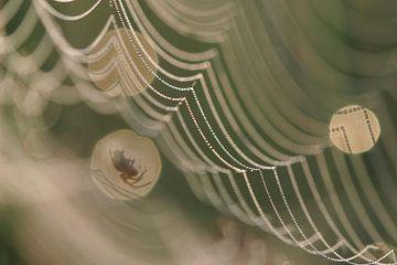 Spin op zijn web in diafragmaring. van