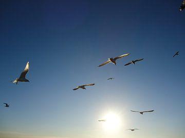 Zeemeeuwen vliegen de zon tegemoet van Mariska van Essen
