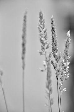 Zwart Wit Gras van DoDiLa Foto's