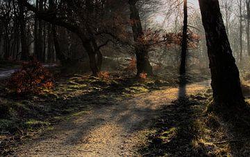 Gouden pad von Gertjan van Veldhuisen