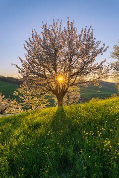 Lebensbaum von Severin Pomsel