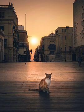 kat van Iman Azizi