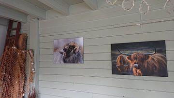 Kundenfoto: Drents Heideschaap von John Dekker