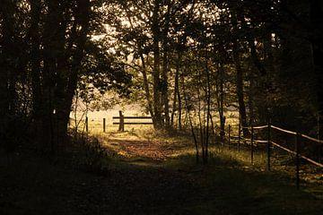 Der Zaun von Theo Bauhuis