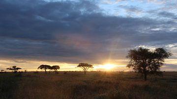 Sonnenaufgang in Afrika auf der Savanne in Tansania von Robin Jongerden