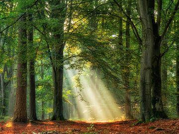 Mächtiger Sonnenstrahl von Lars van de Goor