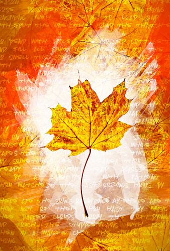 Herfstbladeren Geel van