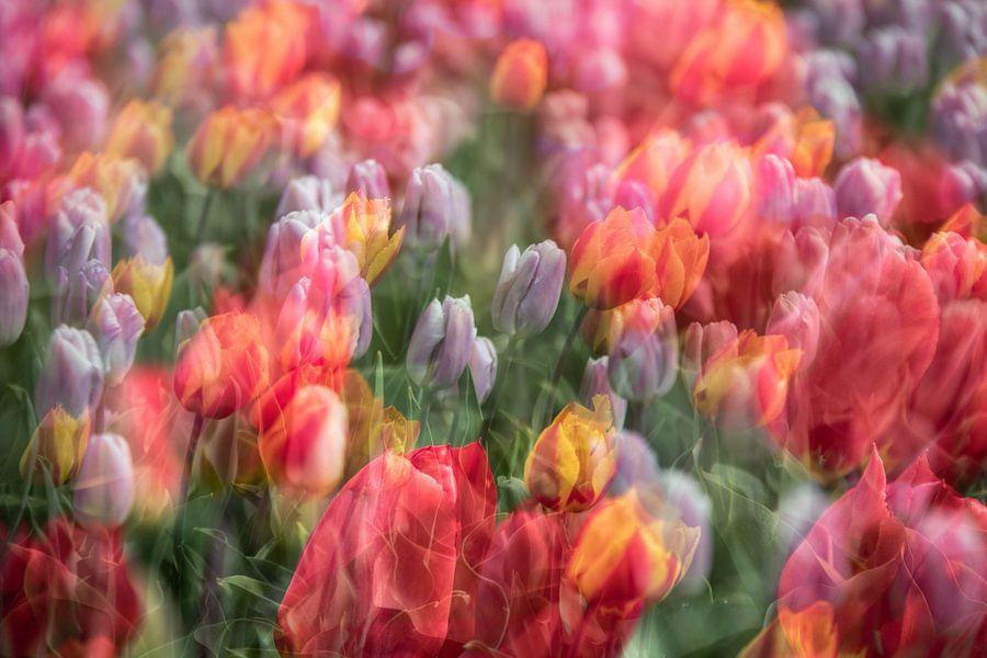 Nederlandse tulpen van Dennisart Fotografie