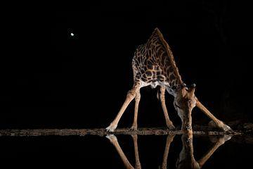 Une girafe boit au milieu de la nuit dans un courant d'eau sur Peter van Dam