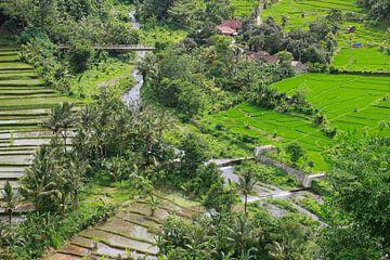 Rijstvelden op Bali van Martijn Stoppels