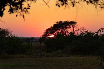 Afrikanischer Sonnenuntergang von GoWildGoNaturepictures