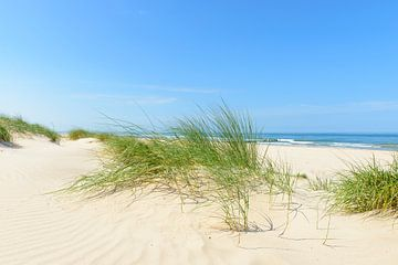 Zomer in de duinen bij het strand aan de Noordzee van Sjoerd van der Wal