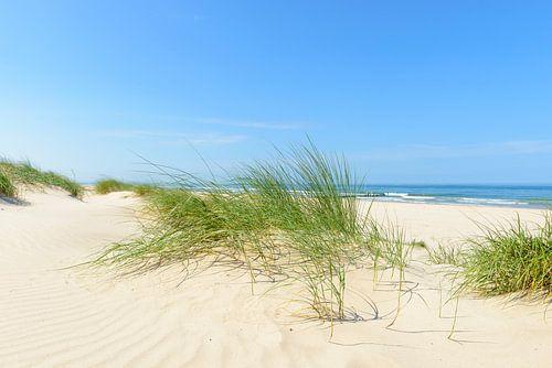 Zomer in de duinen bij het strand aan de Noordzee