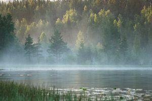 Mist in Zweden