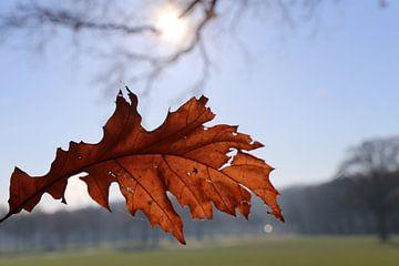 Autumn van Marcel Hondeveld
