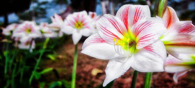 Javaanse bloemen van Jaap van Lenthe