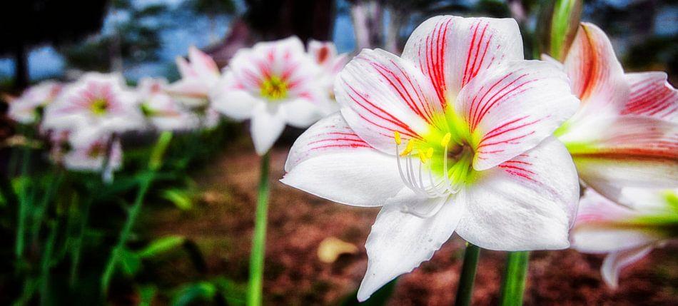 Javaanse bloemen