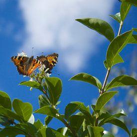 Twee vlinders op de bloei van een Liguster van Berthilde van der Leij