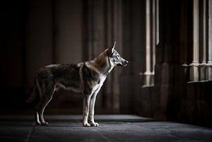 Wolfshund in einer schönen dunklen Architektur