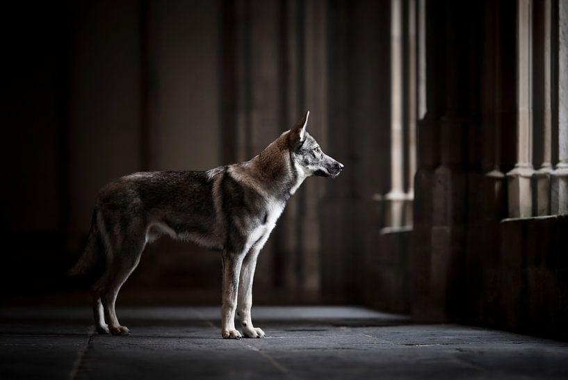 Wolfshund in einer schönen dunklen Architektur von Lotte van Alderen