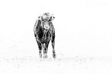 Junger Stier