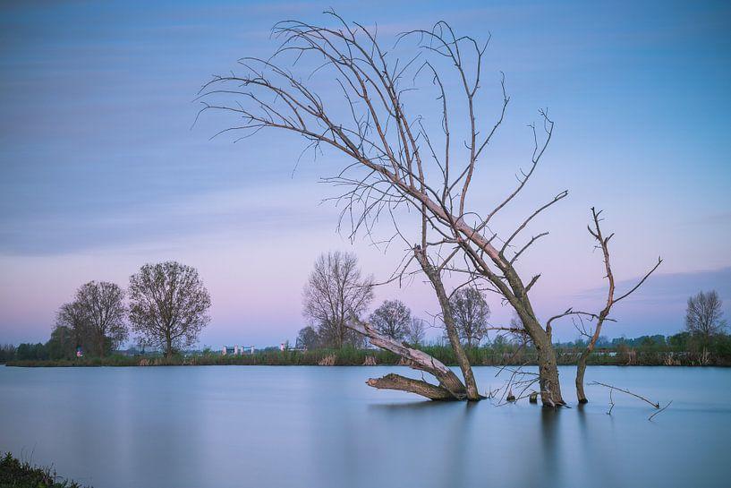 Dode boom in het water van Jan van der Vlies