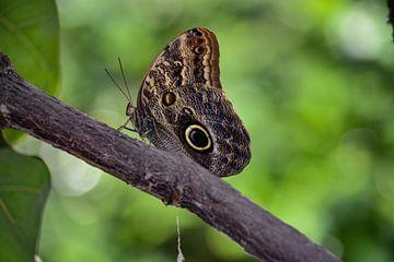 Vlinder in het groen van Lizet Wesselman