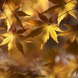 De herfst op zijn mooist van Bert Hooijer